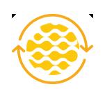 icon head